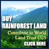 Buy Rainforest Land! click here